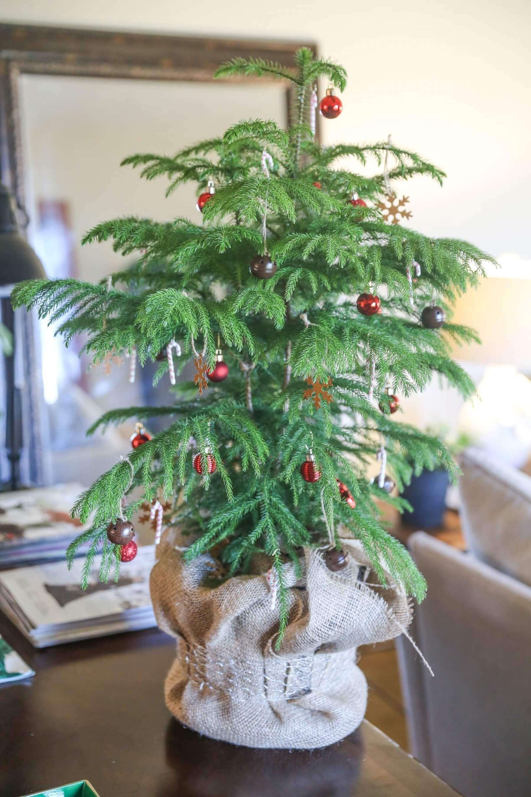 Guest Blog: Make your own mini living Christmas tree! | Council ...